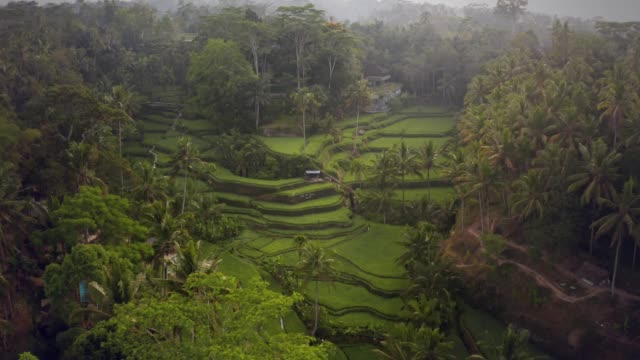 aerial of tegallalang rice terrace - indonesia landscape stock videos & royalty-free footage