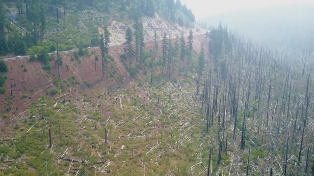 Aerial  of Trees in Brookings Oregon