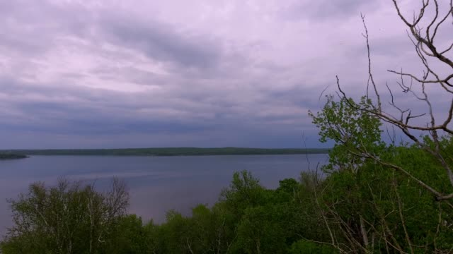 aerial of trees on a lakeshore - lakeshore stock videos & royalty-free footage