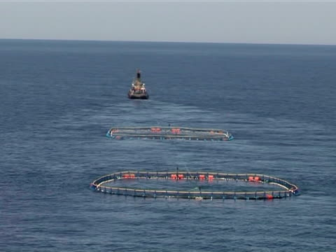 Aerial of tug boat towing two cages with live blue fin tuna, Mediterranean Sea.