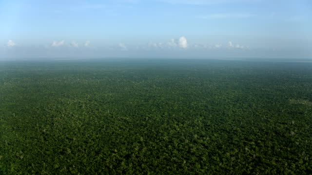 aerial of vast tropical forest in mexico - tropical rainforest stock videos & royalty-free footage
