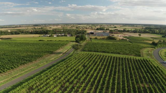 aerial of vineyards near to les verchers sur layon, france. - french culture stock videos & royalty-free footage