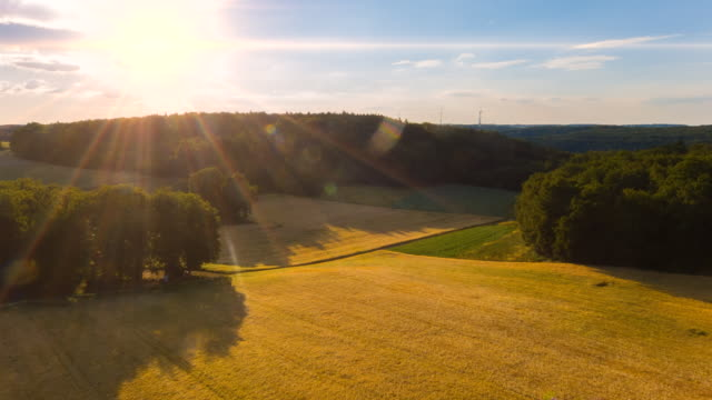 WS aerial of wheat fields at sunset