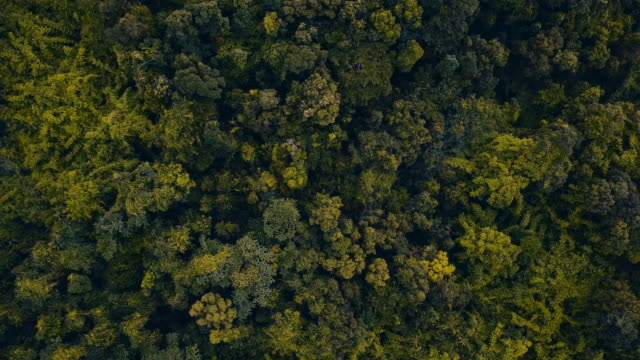 Aerial over a dense tropical forest and hill tops.