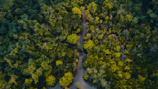aerial over a dense tropical forest and hill tops. - trat province stock videos and b-roll footage