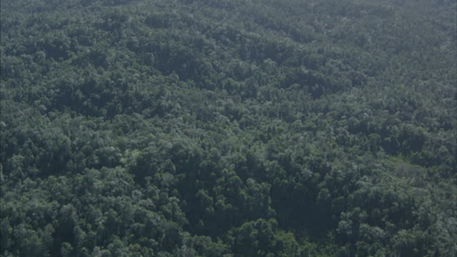 Aerial over a dense tropical forest and hills with mountains in the background.