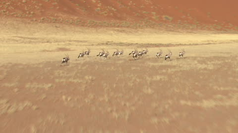 aerial over a herd of oryx running over the landscape of namibia. - aerial or drone pov or scenics or nature or cityscape stock videos & royalty-free footage