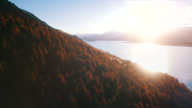 aerial over alpine autumn forest - sunny stock videos & royalty-free footage