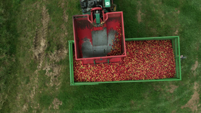 stockvideo's en b-roll-footage met aerial over apple crop being poured into trailer, uk - boomgaard