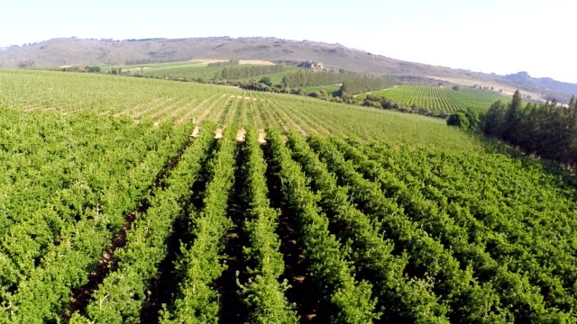 vídeos de stock, filmes e b-roll de aerial over apple farm in piketberg, western cape, south africa - orchard