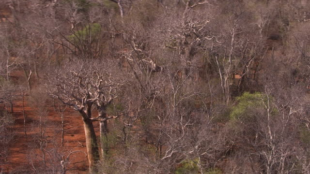 Aerial over arid spiny forest landscape, Madagascar