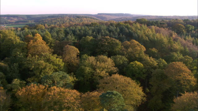 aerial over autumnal woodland, uk - forest stock videos & royalty-free footage