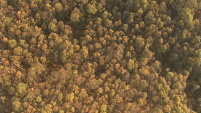 Aerial over autumnal woodland, UK