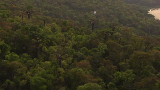 aerial over baobab trees (adansonia) in forest, madagascar - küste stock-videos und b-roll-filmmaterial
