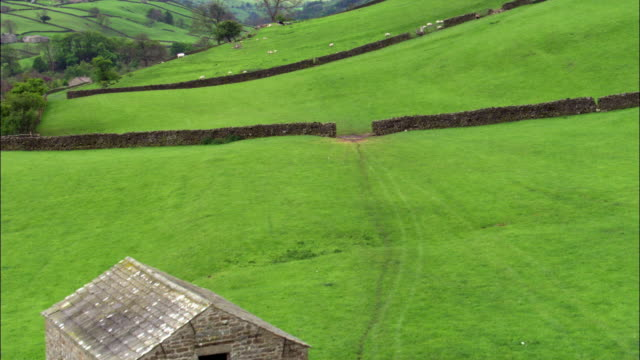 Aerial over barn, fields and sheep, Yorkshire Dales, UK