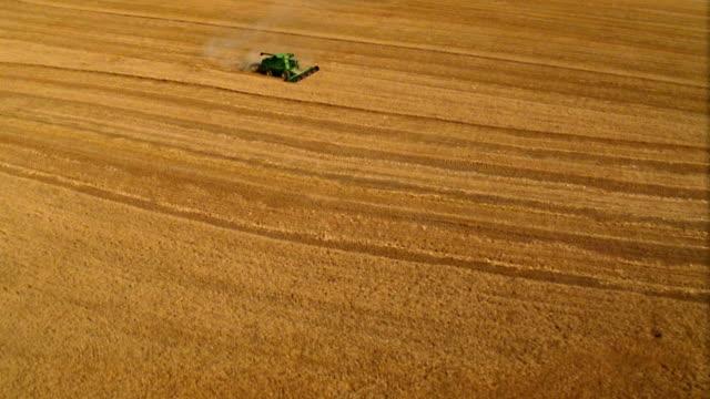 vídeos de stock e filmes b-roll de aerial over combine harvesting in golden wheat field - trator