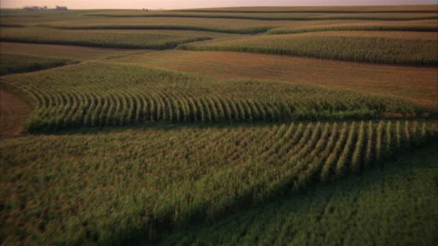 aerial over corn field / iowa - iowa stock videos & royalty-free footage