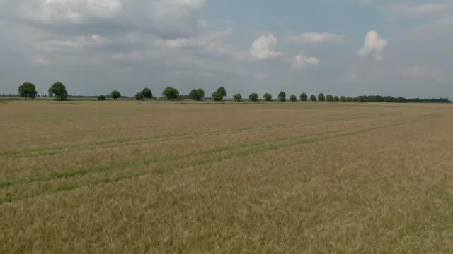 aerial over farmland field in the fens - イーストアングリア点の映像素材/bロール