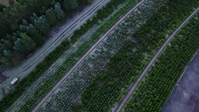 aerial over field of christmas trees - evergreen stock videos & royalty-free footage