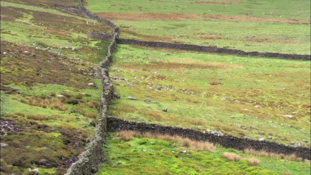 aerial over fields and dry stone walls, yorkshire dales, uk - england stock-videos und b-roll-filmmaterial