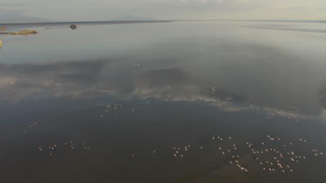 aerial over flamingos on lake natron, tanzania - タンザニア点の映像素材/bロール