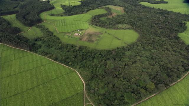 aerial over forest and fields, uganda - ウガンダ点の映像素材/bロール
