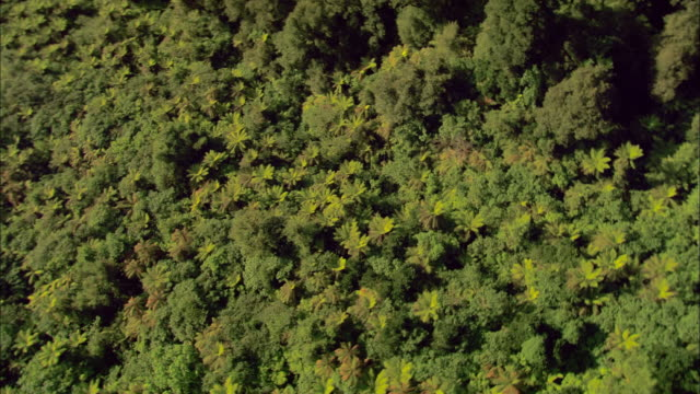 aerial over forest canopy/ fiordland national park, new zealand - dicksonia antarctica stock videos & royalty-free footage