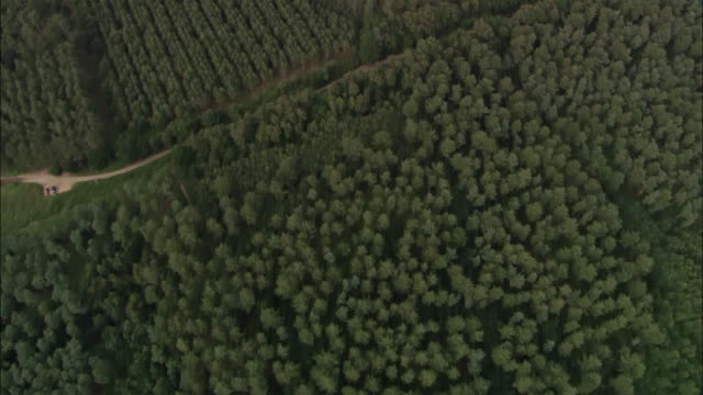 vidéos et rushes de aerial over forest to bentwaters airbase / suffolk, england - aérodrome
