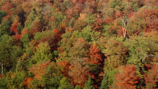 Aerial over forest with Autumn leaves bordering lake or river / plane in the water / Canada