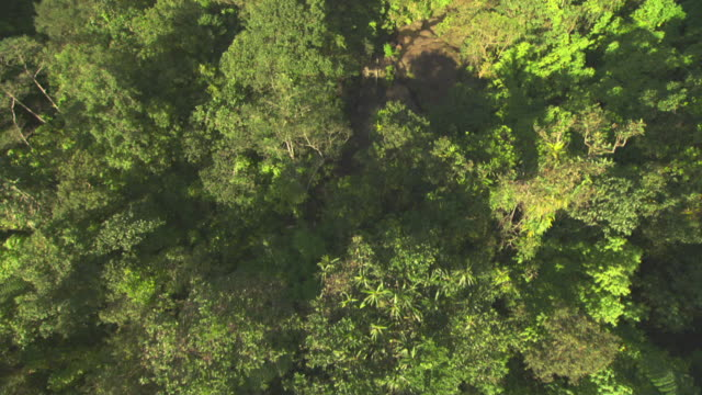 Aerial over forested hillside.