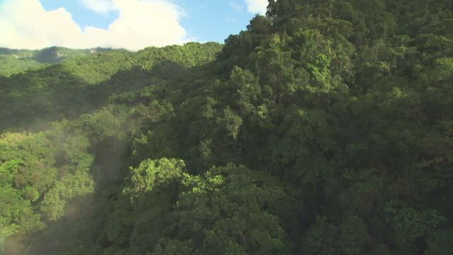 aerial over forested hillside. - tropical rainforest stock videos & royalty-free footage