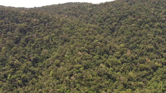 aerial over forested mountain ridge, madagascar - マダガスカル点の映像素材/bロール