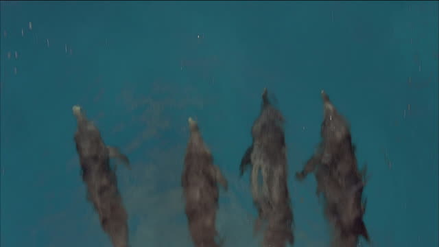 aerial over four dolphins swimming side by side - nassau stock videos & royalty-free footage