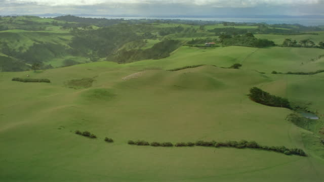aerial over green field / flock of sheep running over hillside / new zealand - grass stock videos & royalty-free footage