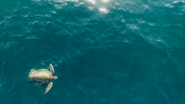 Aerial over green turtle
