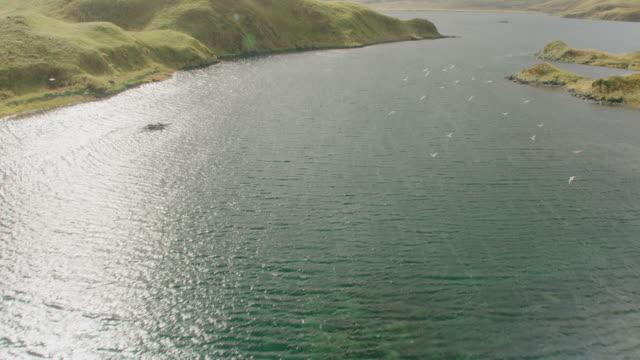 aerial over harbor - アラスカ点の映像素材/bロール