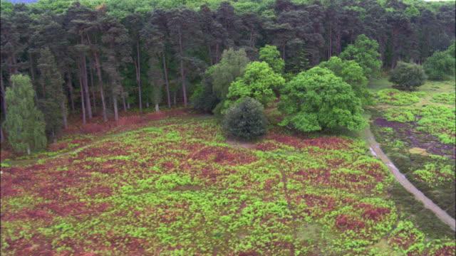 vídeos y material grabado en eventos de stock de aerial over heath and trees in new forest, hampshire, uk - hampshire