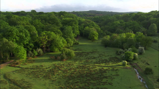 aerial over heath, trees and lake in new forest, hampshire, uk - natural parkland stock videos & royalty-free footage