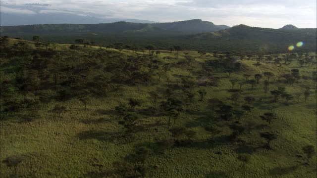 Aerial over hills and Acacia trees, Uganda