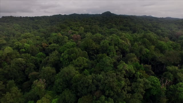 vidéos et rushes de aerial over jungle of chocó, colombia - colombie