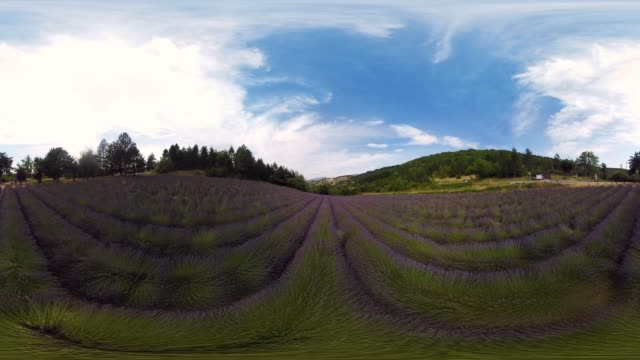 360 Aerial Over Lavender Fields