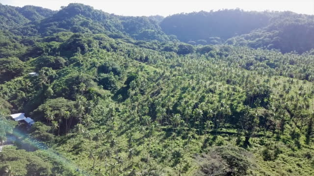 aerial over lush green palm tree forest - vanua levu, fiji - tropical tree stock videos & royalty-free footage