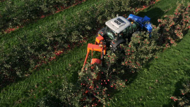 aerial over machinery harvesting apples, uk - apple fruit stock videos & royalty-free footage