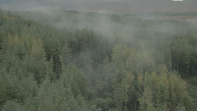 aerial over misty forest; isle of skye, scotland, uk - scottish highlands stock videos & royalty-free footage