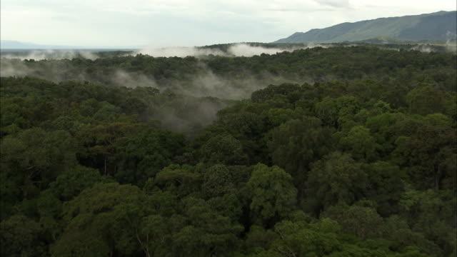 Aerial over misty forest, Uganda