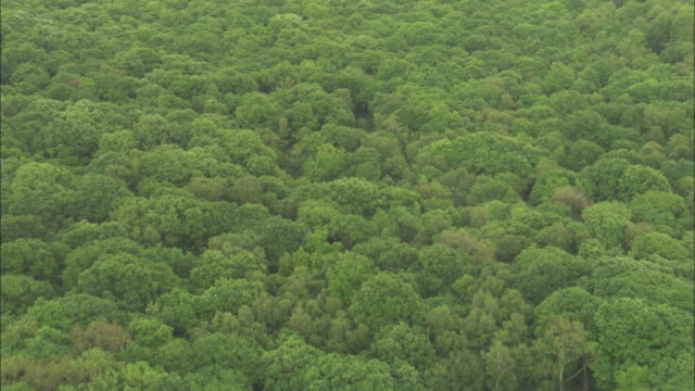 vídeos y material grabado en eventos de stock de aerial over new forest, hampshire, uk - hampshire