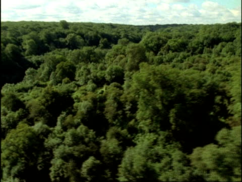 WA Aerial over oak woodland, UK