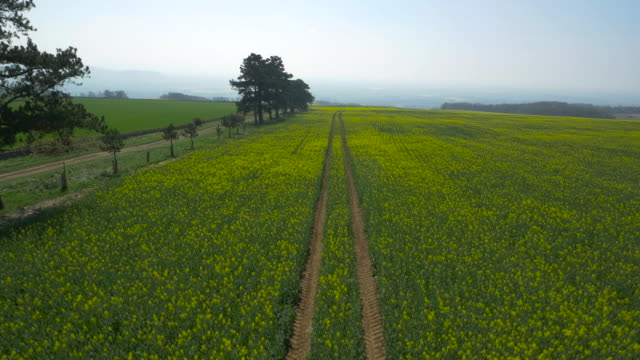 aerial over oilseed rape crop in field, uk - tree stock videos & royalty-free footage