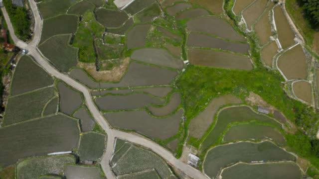 aerial over paddy fields, japan. - takashima shiga stock videos & royalty-free footage