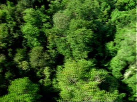 stockvideo's en b-roll-footage met aerial over panama rainforest, barro colorado island (bci).  panama. - panama
